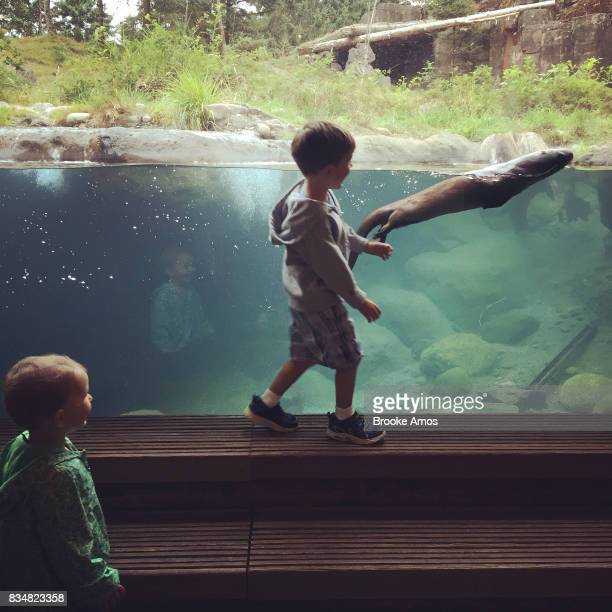 Young brother and sister watching river otter at zoo