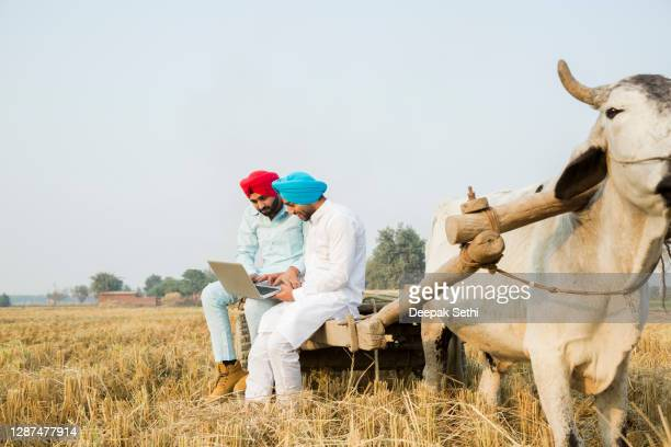 young brothers - stock photo - punjab - india stock pictures, royalty-free photos & images