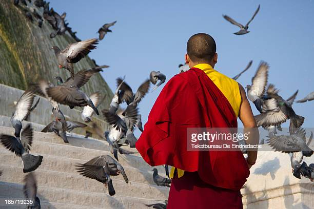 CONTENT] A young buddhist monk feeding pigeons early in the morning at the famous stupa of Bodnath Near Kathmandu Nepal