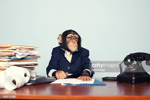 young business ape - monkeys stock photos and pictures