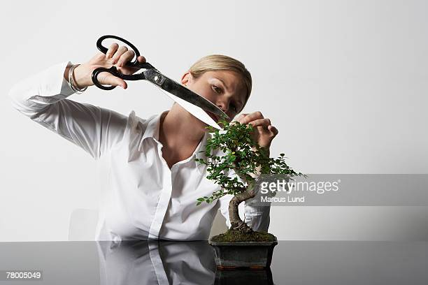 young business woman at desk pruning bonsai tree. - bonsai tree stock pictures, royalty-free photos & images