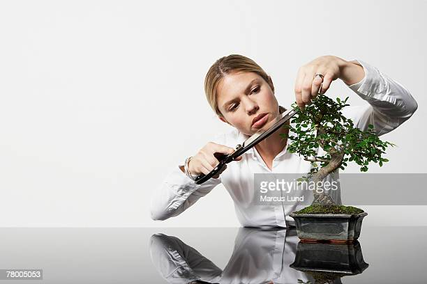 Young business woman at desk pruning Bonsai tree.