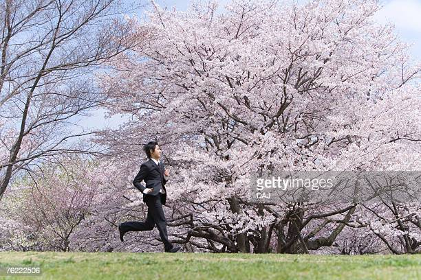 Young businessman running in the field of cherry blossoms, side view, Japan