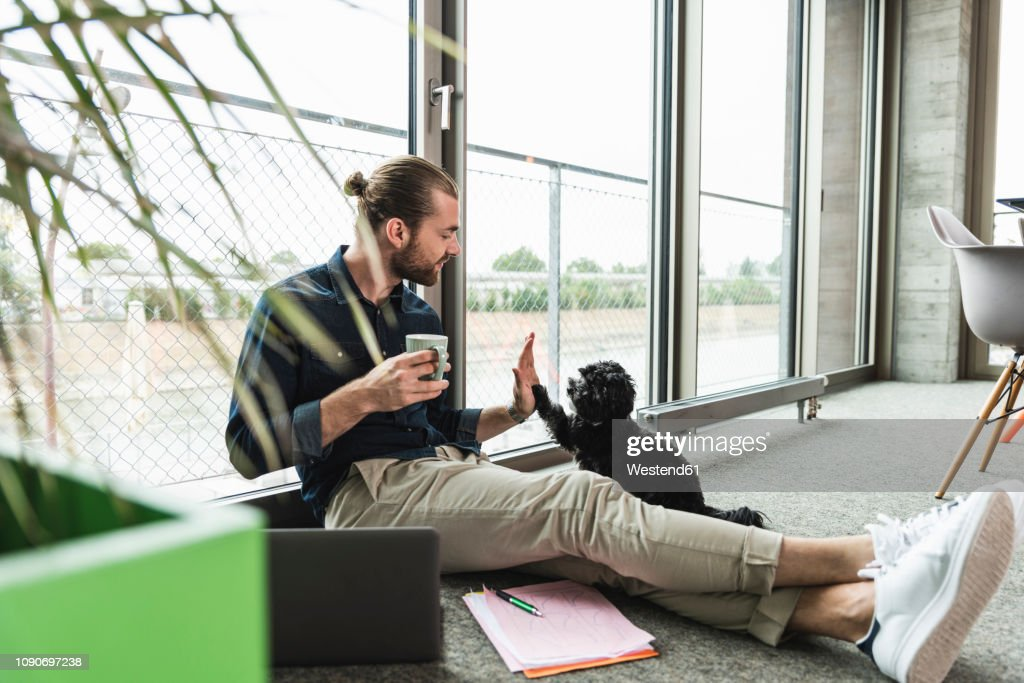 Young businessman with laptop sitting on the floor in office playing with dog : Stock-Foto