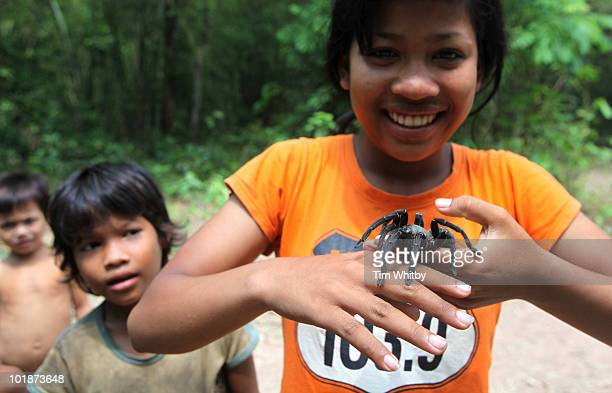 A young Cambodian girl holding a tarantula shortly after it was dug from the ground on June 7 2010 in Skuon Kampong Cham Province Cambodia The trade...