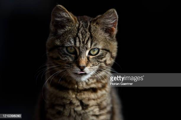 Young cat is pictured on April 17, 2020 in Waldhufen, Germany.