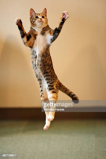Young cat jumping