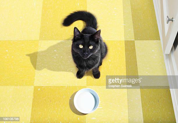 Young cat waits to be fed.
