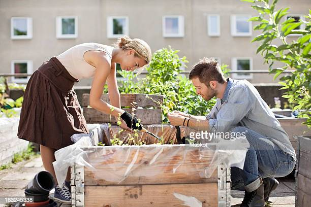 Young Caucasian couple gardening at urban garden