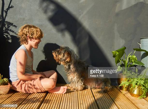young child bonding with his pet dog - sun stock pictures, royalty-free photos & images
