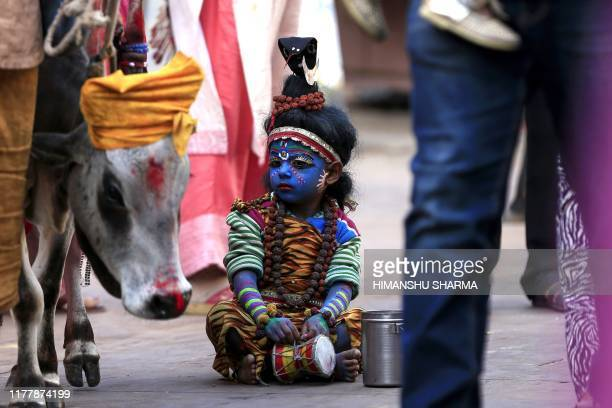 TOPSHOT A young child dressed as the Hindu deity Shiva looks at a cow while waiting for alms from pilgrims in Pushkar in the western Indian state of...
