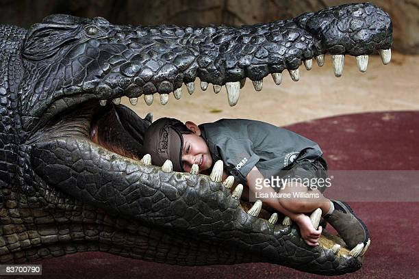 A young child lays in the jaw of a model crocodile during the second annual Steve Irwin Day celebrations at Australia Zoo on November 15 2008 on the...