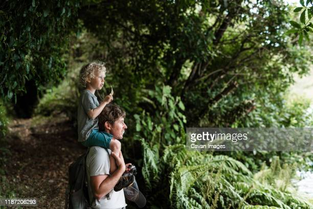 young child sitting on father's shoulders in a forest - new zealand stock pictures, royalty-free photos & images