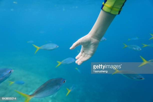 young child snorkeling ,diving with ocean fish