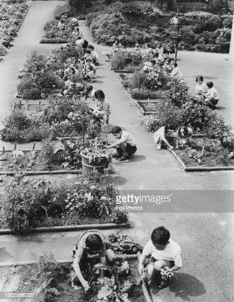 Young children from the Jewish Fresh Air Home and School for Delicate Children busily tend their vegetable garden allotment plots as part of the Dig...