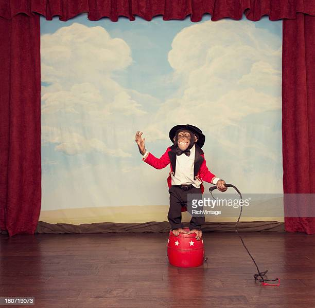 young chimpanzee dressed as circus leader on stage - circus stock pictures, royalty-free photos & images