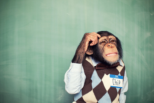 Young Chimpanzee Nerd Student Scratches Head 143177056