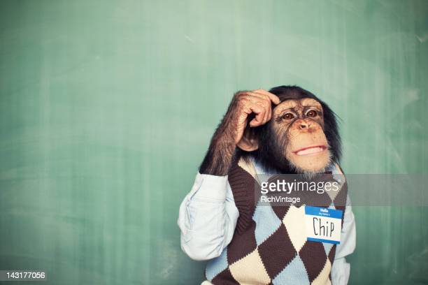 young chimpanzee nerd student scratches head - funny animals stock pictures, royalty-free photos & images