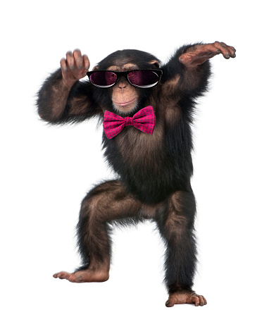 Young Chimpanzee wearing glasses and a bow tie 507263206