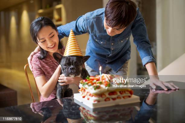 young couple celebrating dog birthday - chinese bulldog stock pictures, royalty-free photos & images