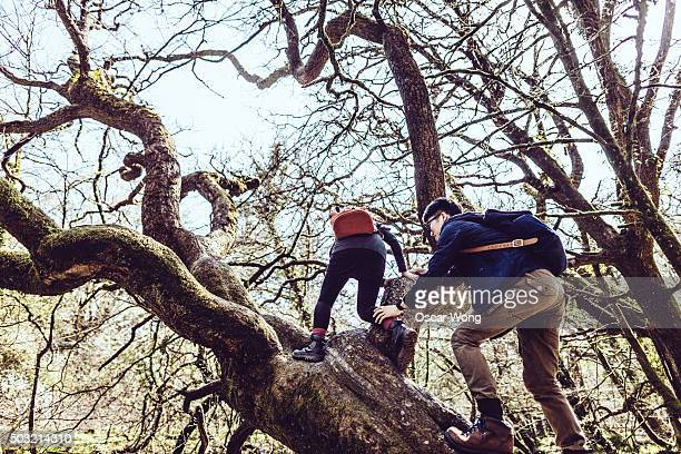 Young couple climbing tree in forest