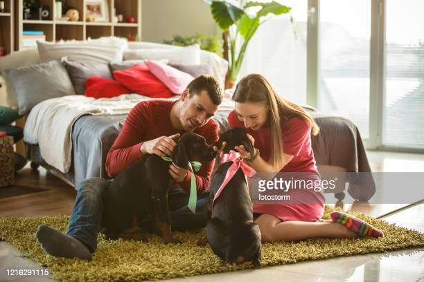 young couple cuddling their doberman puppies - dog knotted in woman stock pictures, royalty-free photos & images