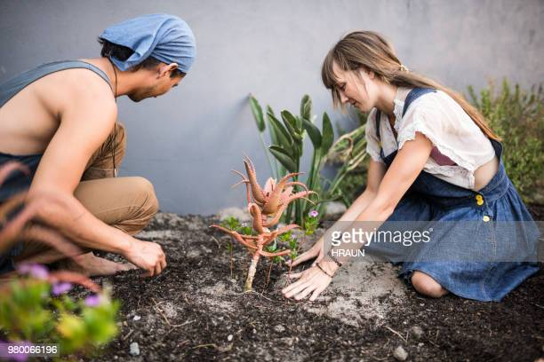 young couple gardening in yard - doing a favor stock pictures, royalty-free photos & images
