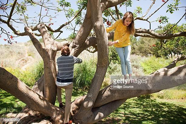 Jeune couple dans un arbre