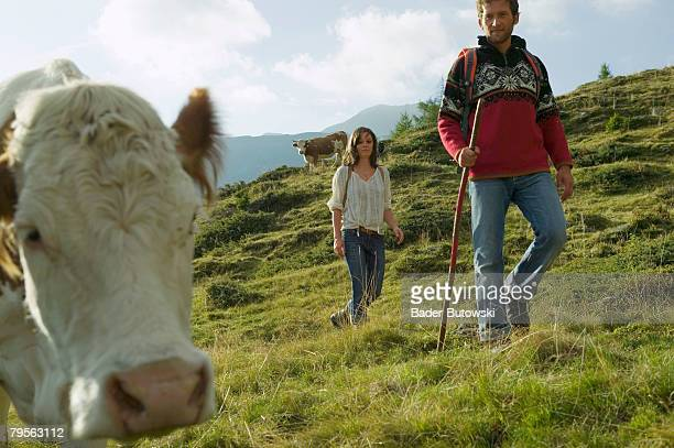 Young couple in moutains, cow in foreground