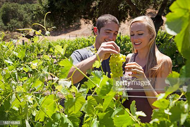 young couple in vineyard, man holding white grapes - los olivos california stock pictures, royalty-free photos & images
