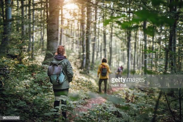 junges paar auf wandern im wald - naturwald stock-fotos und bilder