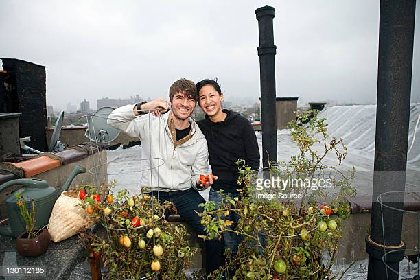 Young couple on roof garden growing tomatoes