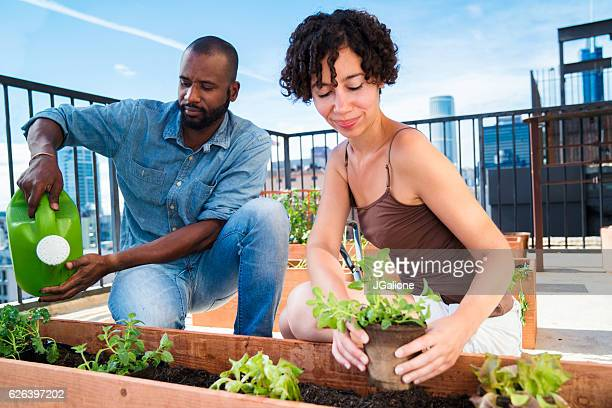 Young couple planting flowers together