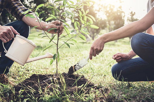 Young couple planting the tree while Watering a tree working in the garden as save world concept, nature, environment and ecology 941511336