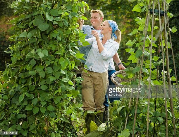 young couple pruning a bean plant - bohnenranke stock-fotos und bilder