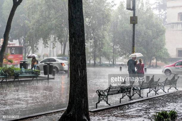 a young couple sharing an umbrella in heavy rain in coyoacán mexico city - torrential rain stock pictures, royalty-free photos & images