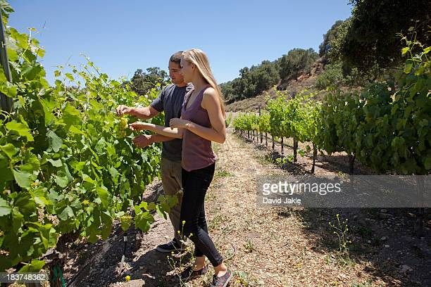 young couple standing in vineyard - los olivos california stock pictures, royalty-free photos & images