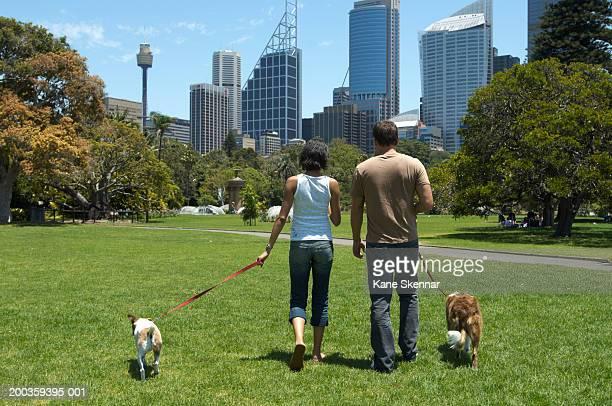 young couple walking dogs in park, rear view - blauwe riem stockfoto's en -beelden
