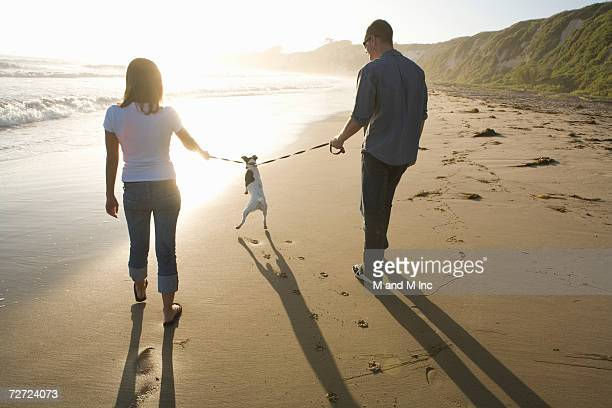 Young couple walking on beach, holding dog on double leash, rear view
