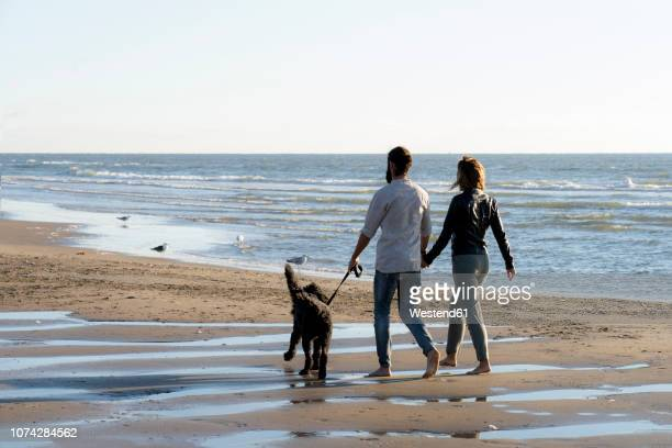 Young couple walking with their dog on the beach