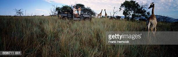 Young couple watching giraffes from 4x4