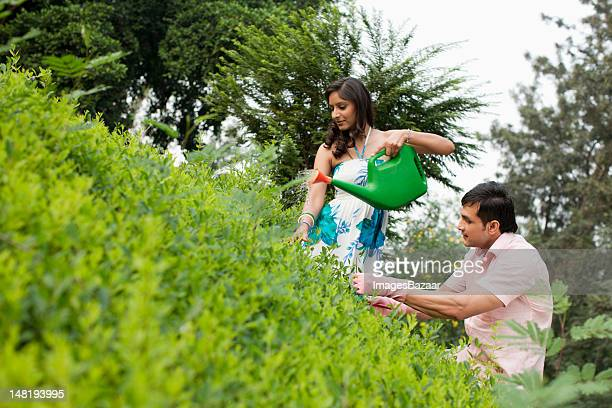 Young couple watering plants in garden