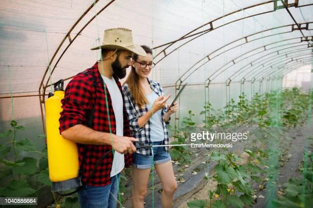 Joven pareja con tableta digital trabajando en un invernadero
