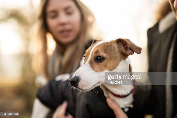 young couple with their jack russell puppy - jack russell terrier foto e immagini stock