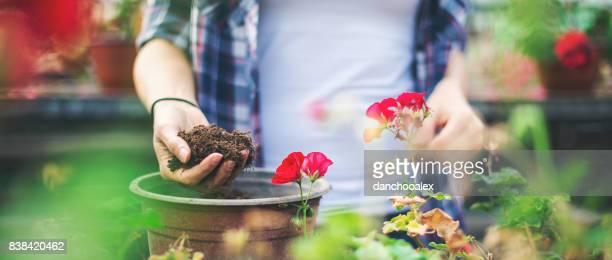 Junges Paar in einem Gewächshaus mit Blumen arbeiten
