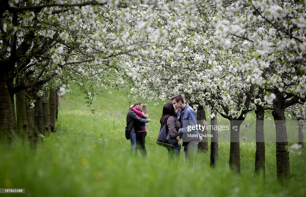 Young couples kiss under a cherry blossom tree as part of Czech May Day tradition on the Petrin Hill on May 1, 2013 in Prague, Czech Republic. In addition to celebrations across the globe of the beginning of spring throughout the world, workers are gathering in city centers to annually vent their grievances and support their worker's unions.