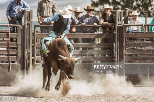 a young cowboy in action while bareback riding on a bucking bull while a group of cowboys watch him in the background. - bucking stock photos and pictures