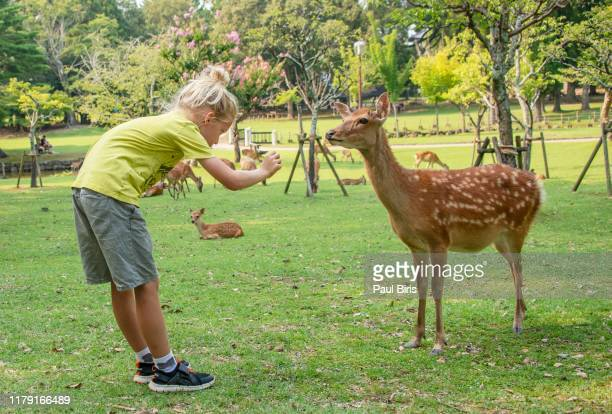 young cute boy saluting and  feeding  wild deer in nara, japan. - holy city park stock pictures, royalty-free photos & images