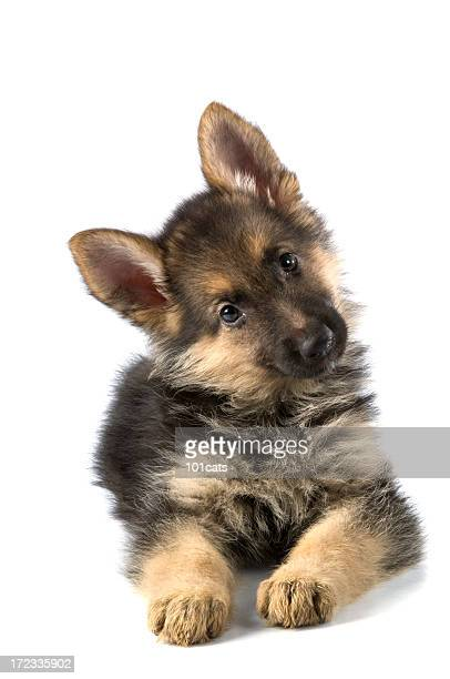 young dog - puppy stock pictures, royalty-free photos & images