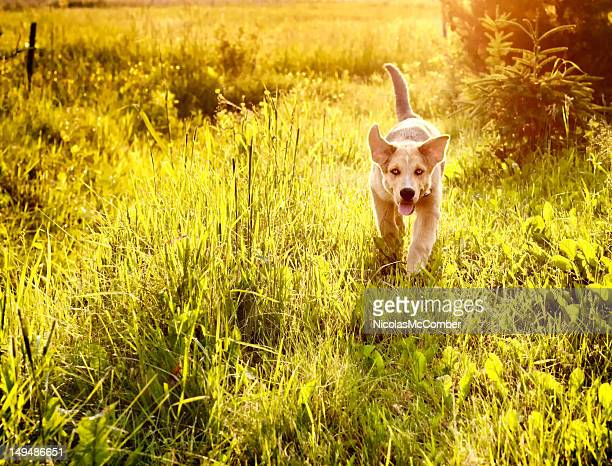 Young dog running in a meadow
